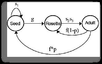 Alliaria diagram 2