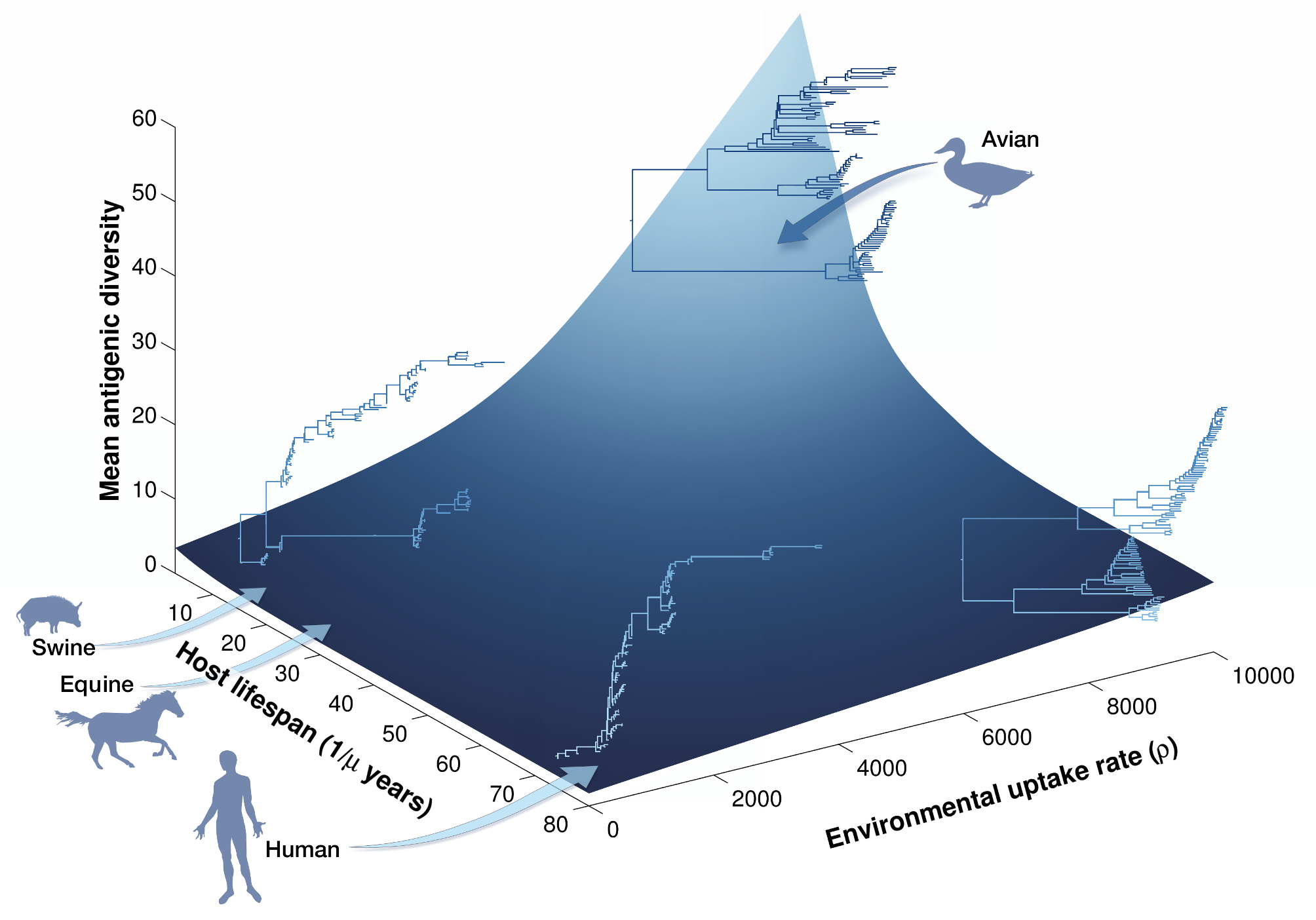 Genetic diversity of avian influenza virus is driven by host lifespan and environmental transmission. Image credit: Roche, B., J.M. Drake, J. Brown, D. Stallknecht, T. Bedford & P. Rohani. 2014. Adaptive evolution and environmental durability jointly structure phylodynamic patterns in avian influenza viruses. PLOS Biology 12:e1001931.