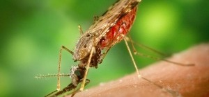 Ecology of West Nile virus in New York City