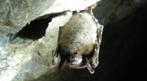 UPDATE: Projected spread of White-nose Syndrome