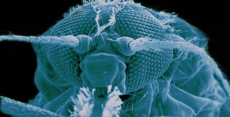 Leading indicators of mosquito-borne disease elimination