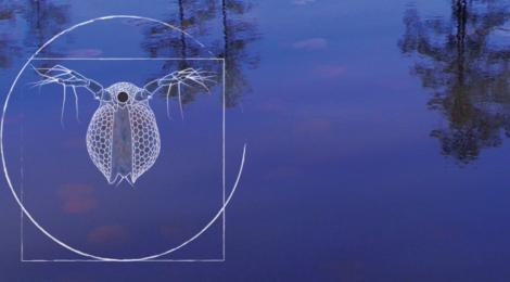 Zooplankton Diversity Project